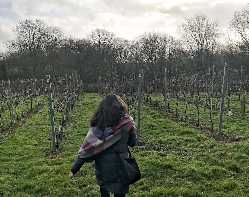 vineyard walk Sussex